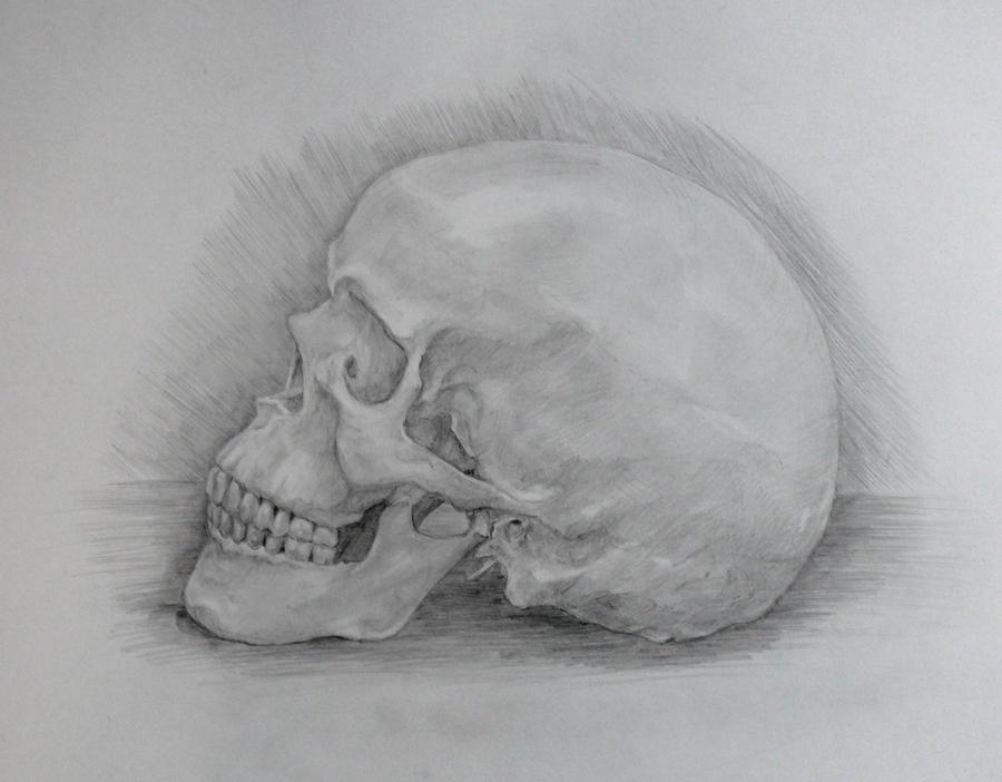 Skull by Feleri