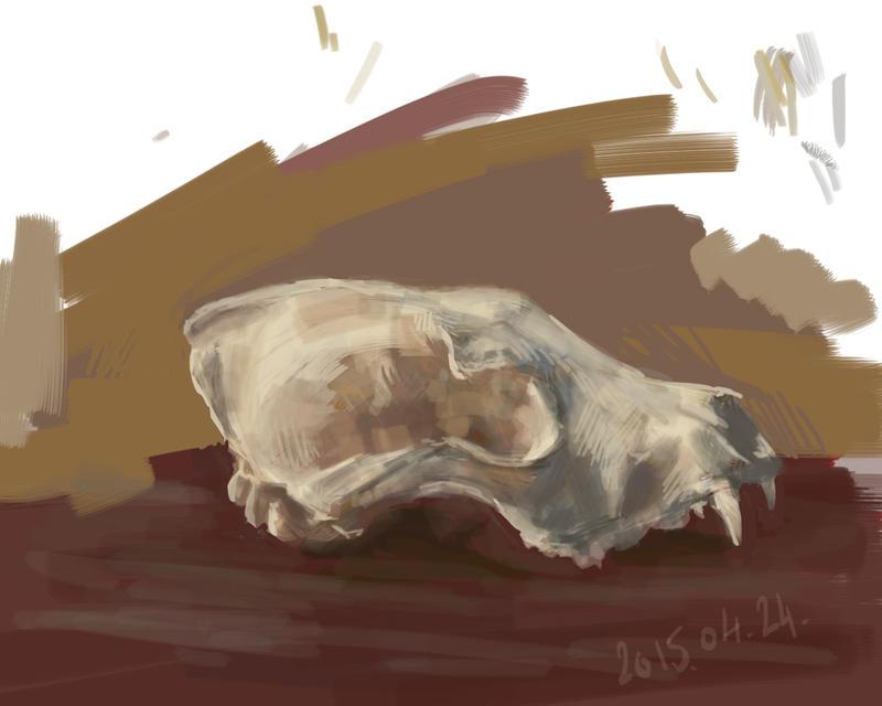 Skull study by Feleri