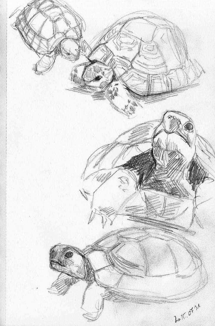 Studying tortoises... by Feleri