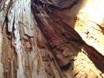 Inside of a Tree