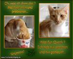 Cat-Tasting01
