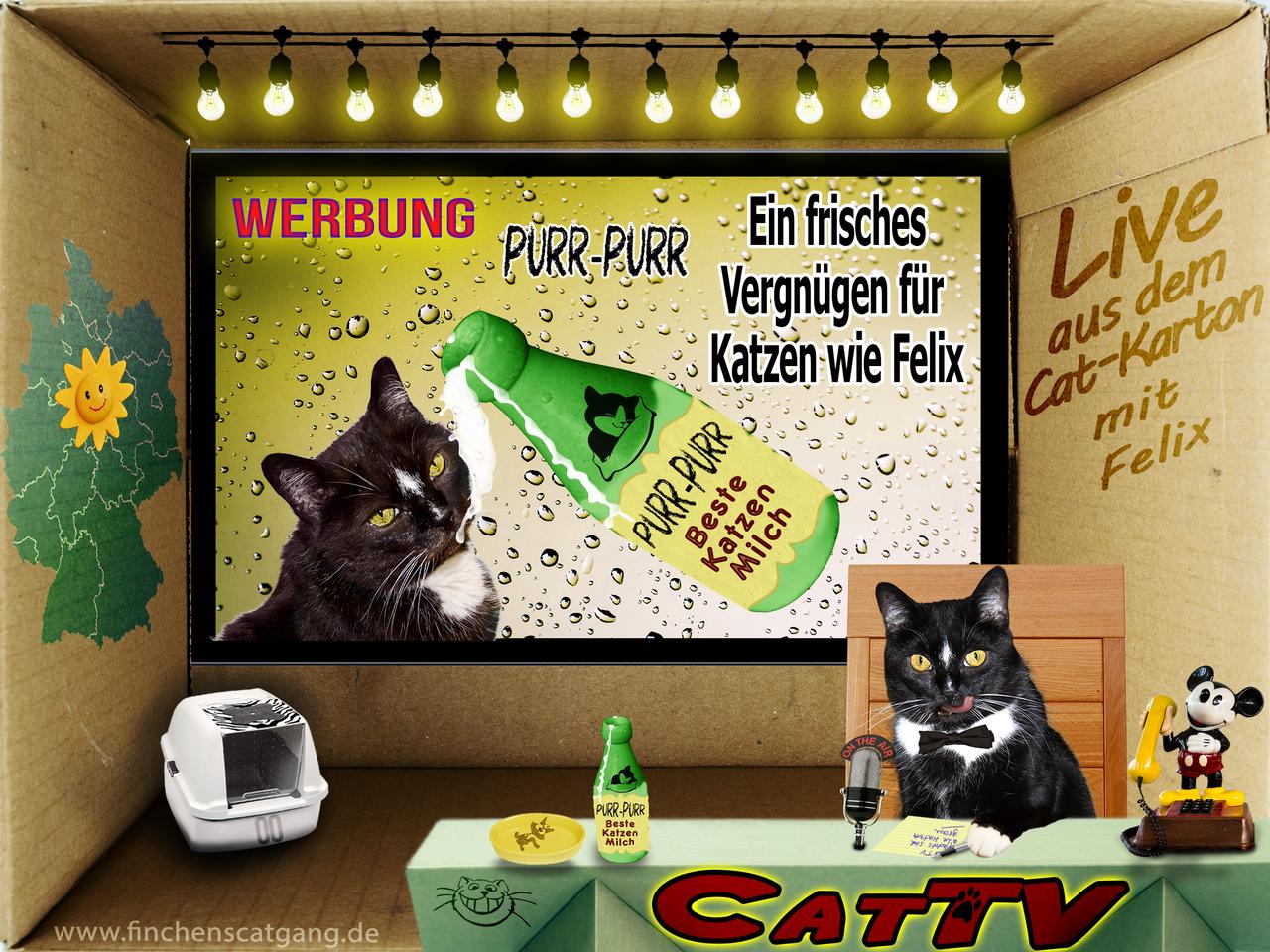CatTV 04