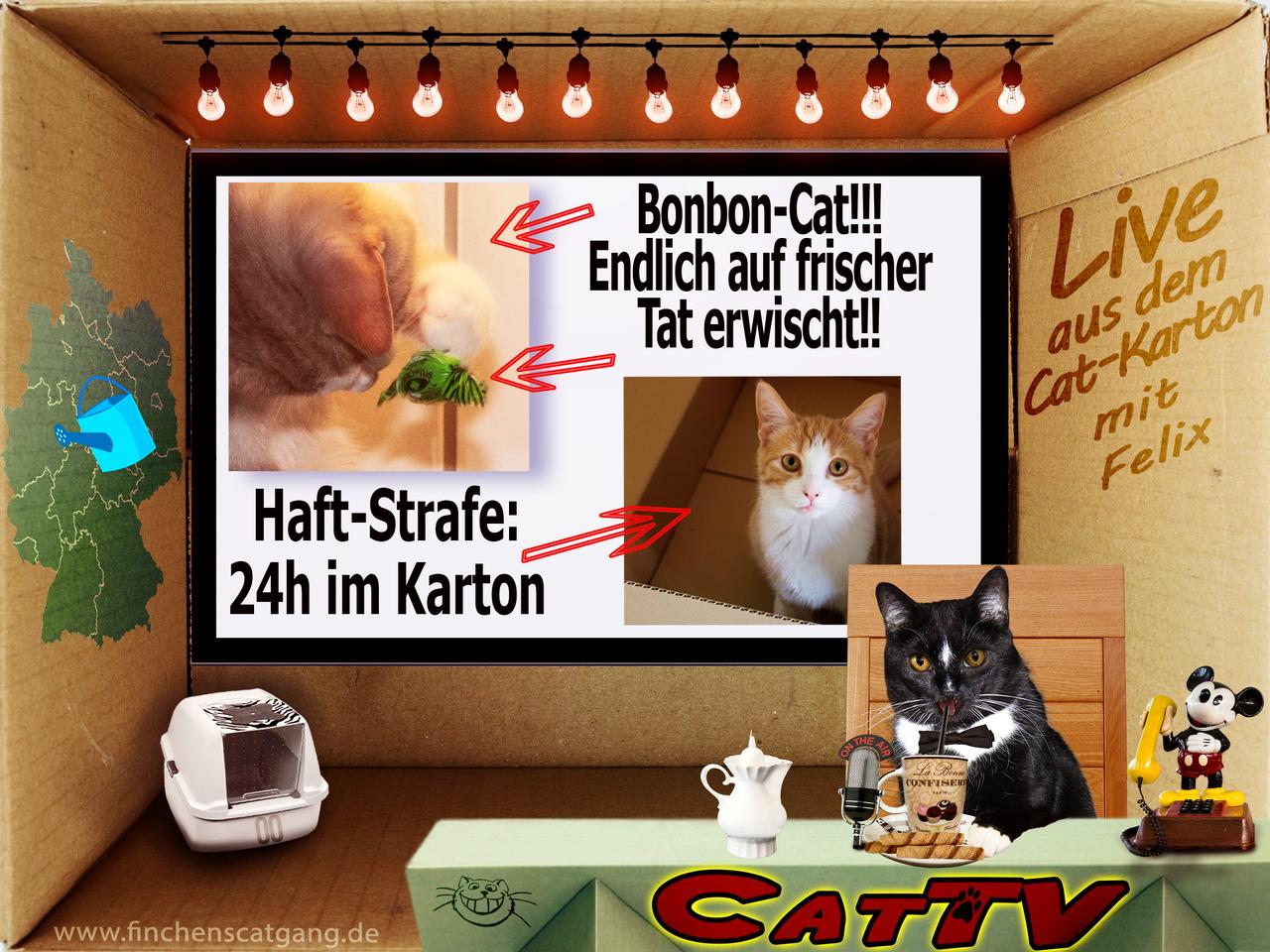 CatTV 05