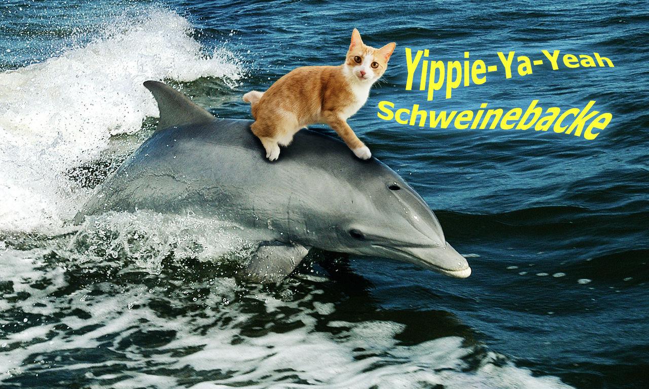Finchen trainiert Flipper
