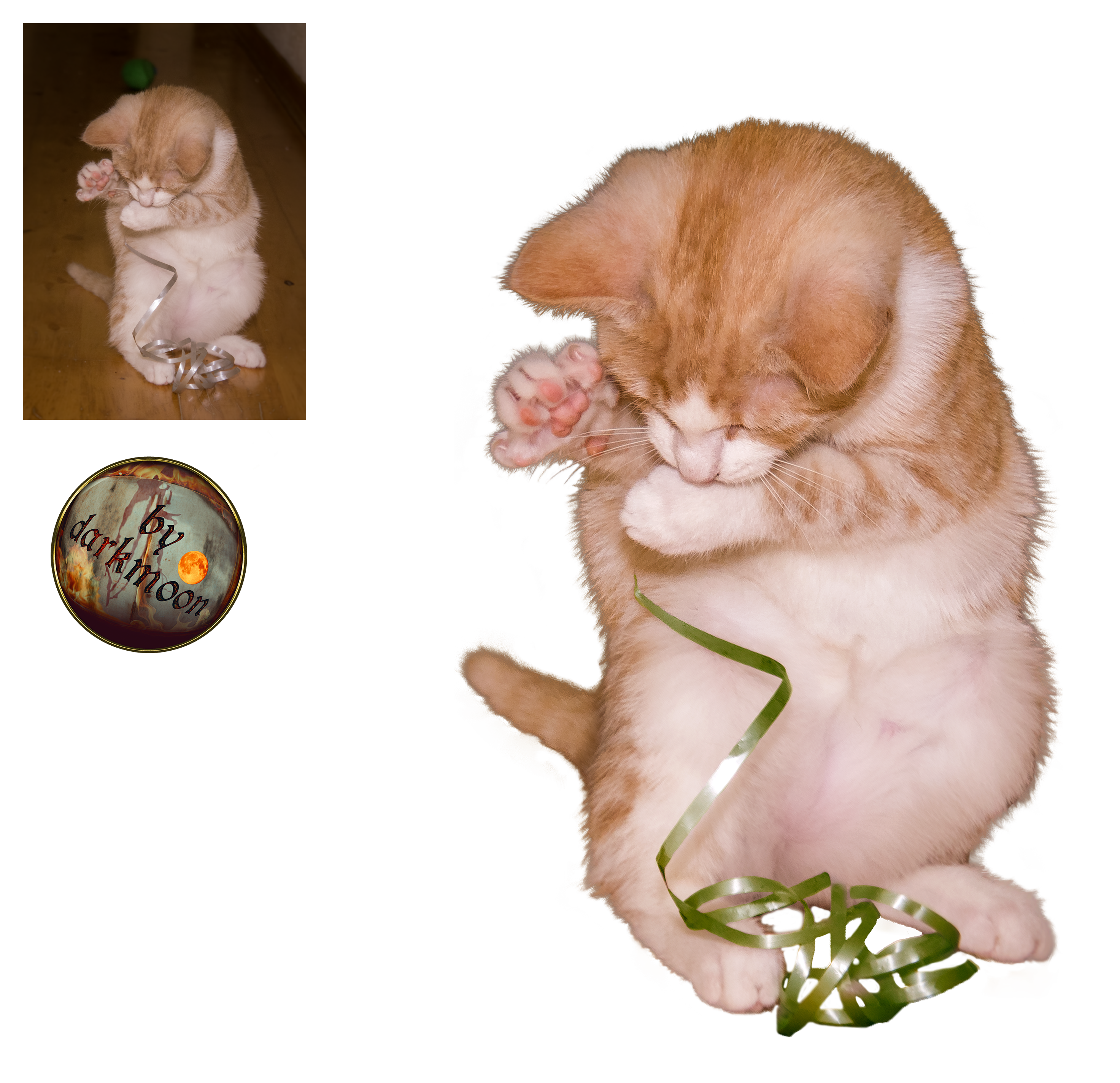 Playing Cat - PNG stock
