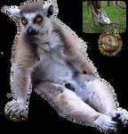 Lemur - PNG Stock
