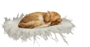 cat on feather - PNG