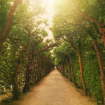 avenue of trees premade background stock