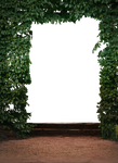 hedge - PNG stock