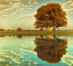 landscape see and tree backgroundstock