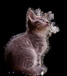 wild kitten cat - PNG -stock
