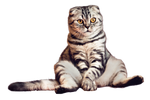 chilling cat - PNG - stock