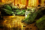 stream in forest - Premade background