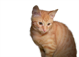 sweet cat - PNG stock