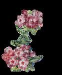 Vintage flower for corner - cutout - scrapbooking