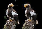 Giant eagle - CC0 - PNG by Darkmoon-Art-de