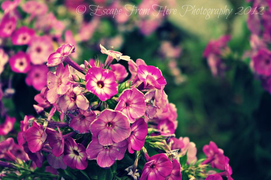 Purple Flowers by jltrafton