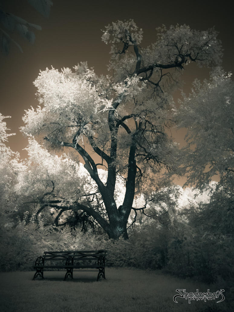 Tree and Bench by mauthbaux