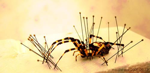 Spiderpins