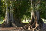 .::+Tree Stock no.4+::.