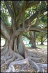 .::+Tree Stock no.12+::.