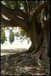 .::+Tree Stock no.13+::.