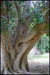 .::+Tree Stock no.15+::.