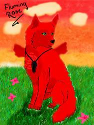 Flaming Rose Gift