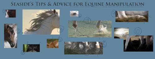 Horse Manipulation Tips