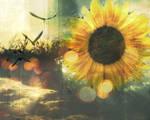 sunflower bokeh by Kerbi