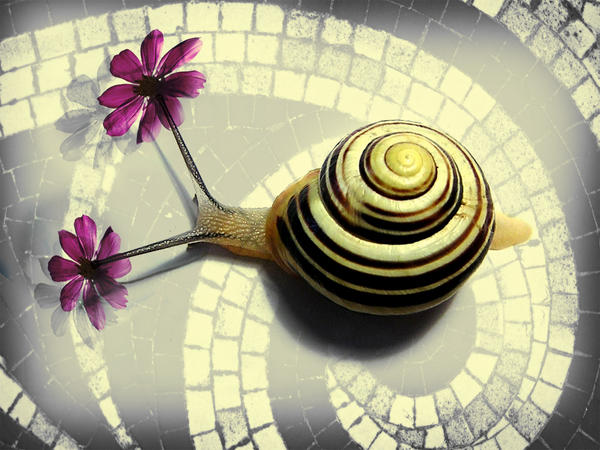 flowering snail - Tlon