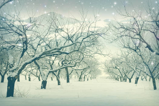 winter dreamscape