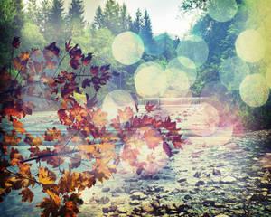 1016 fall leaves bokeh