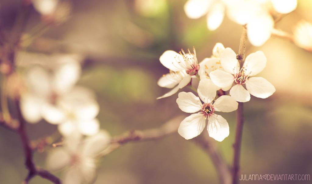 blossom by Julanna