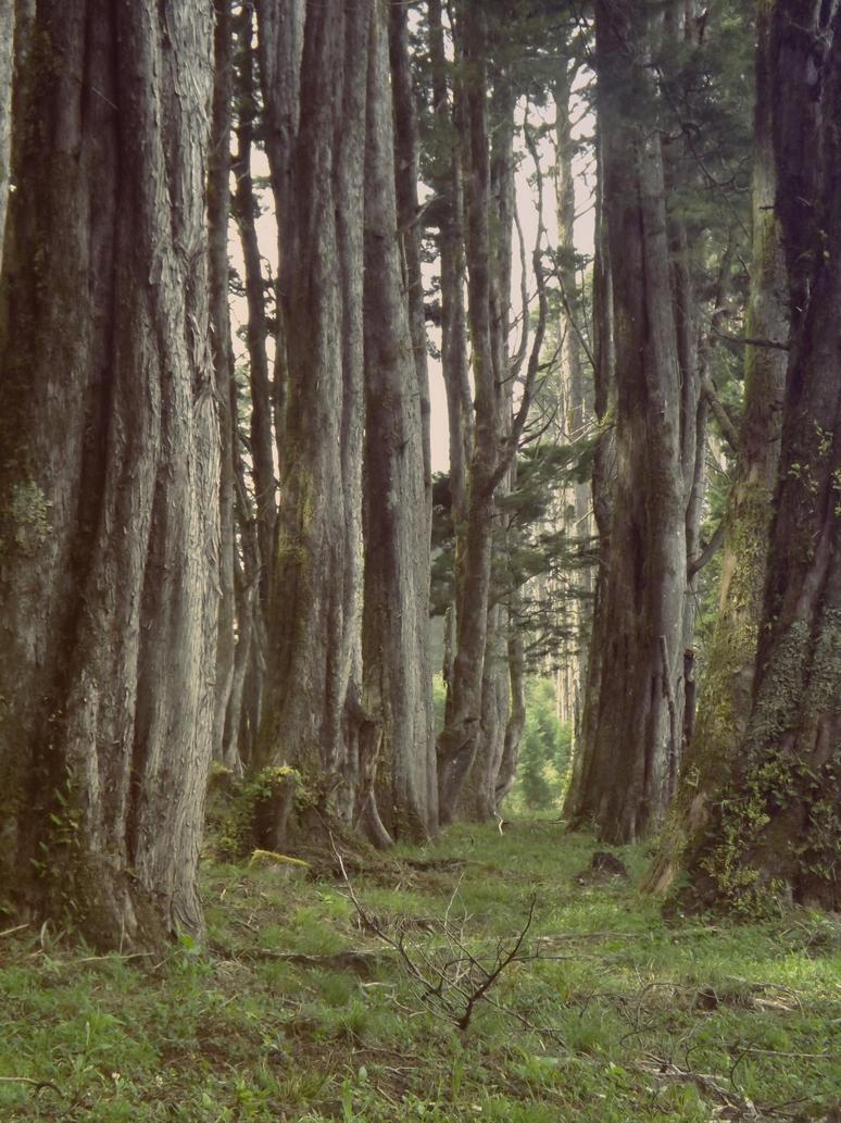 Trees by PrincessTeppelin