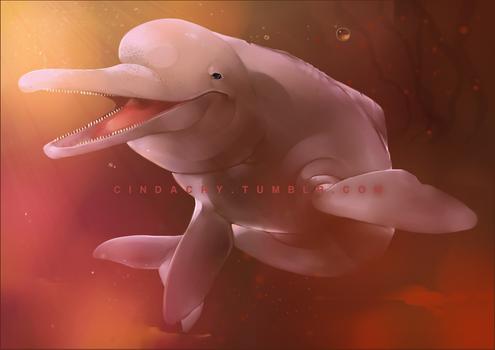 Amazonian River Dolphin