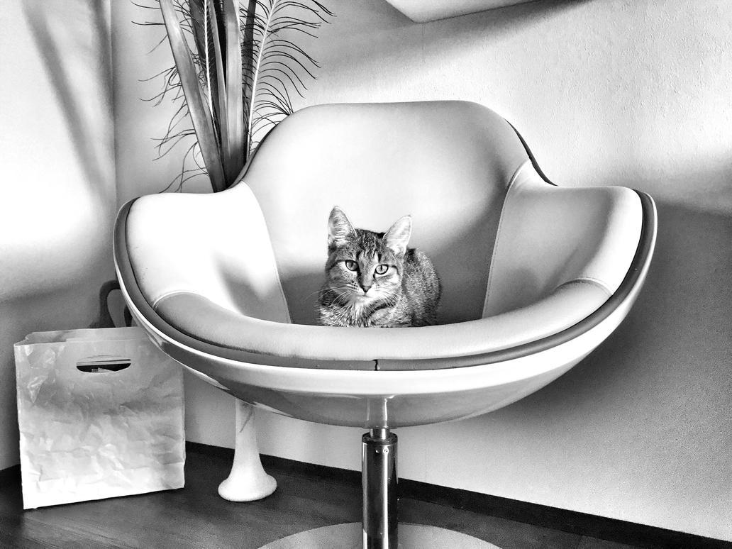 Sunny the cat by Nicschi