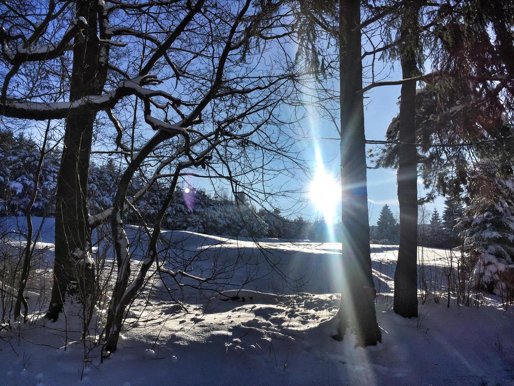Winter by Nicschi