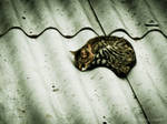 Cat's Bed I
