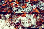 The Autumnal Crush
