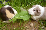 Dolly and Peppa sharing a dandelion