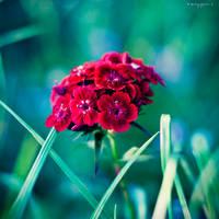 flower2 by oxygen2608