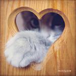 cat in heart by oxygen2608