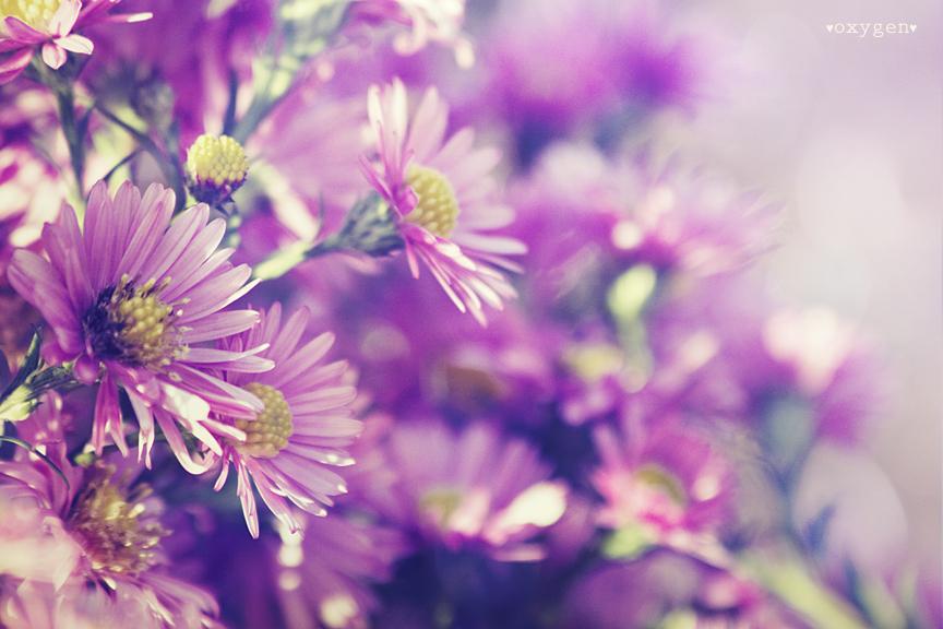 violet flower by oxygen2608