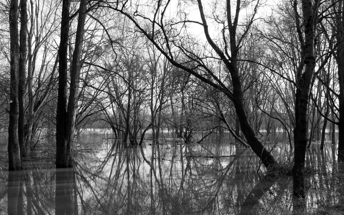 Reflets sur le marais by combrette