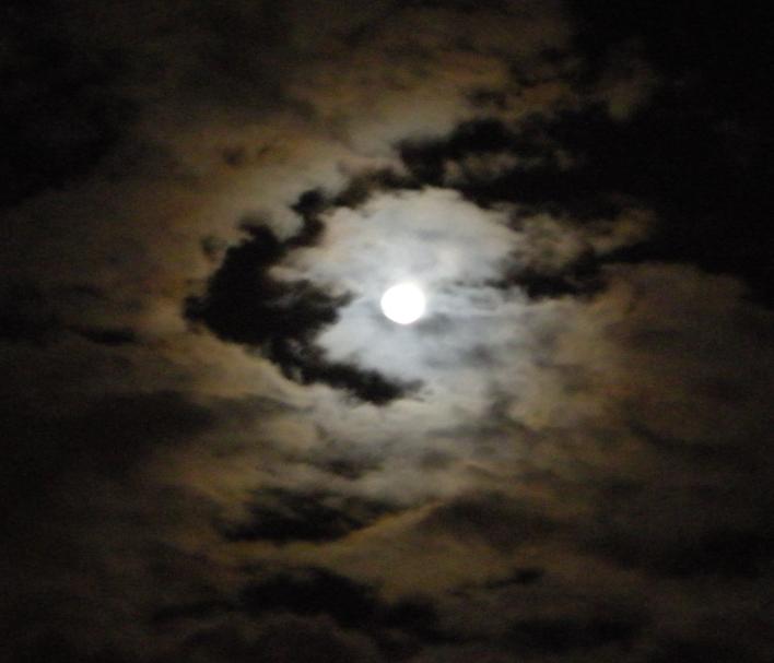 Moonlight by Vynnx