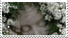 Alyssum by TRASHYADOPTS