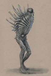 Osteomorph