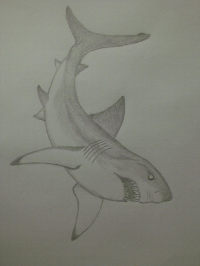 Great White sketch #2 by Serpentrinity