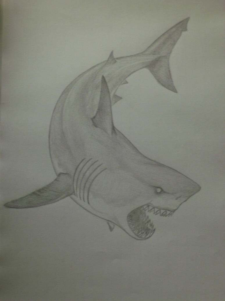 Great White Shark sketch #3 by Serpentrinity